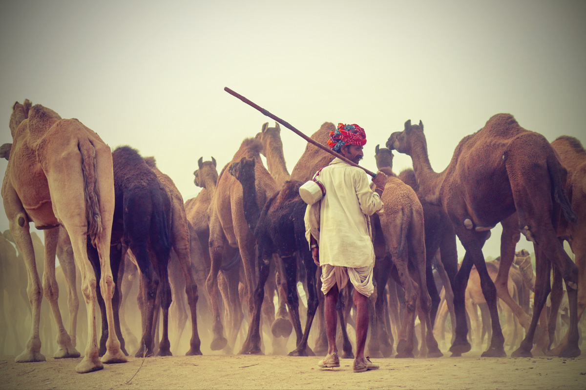 Pushkar Camel Fair - By Ankur Hazarika